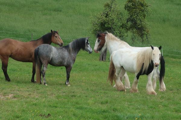 So viele Pferde 09.05.2020