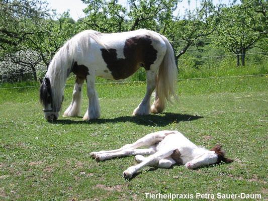 Candy und Derry, Fohlenschlafstunde 04.05.2003