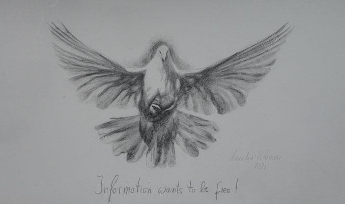 Information wants to be free | Bleistift auf Papier | 58x37cm