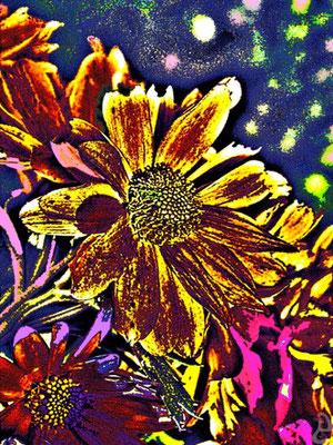 Nachtsonne | Digital-Fotografie überarbeitet auf Leinwand | 80x60cm