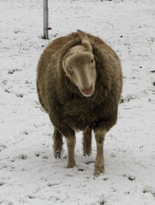 Mist, Schnee im Ohr....
