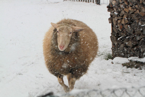 Schnee macht Spaß!