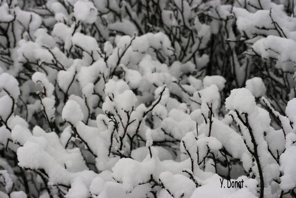 Schneefall ohne Ende!