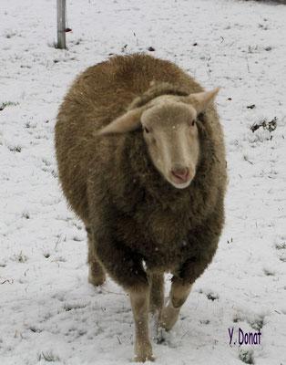 Schnee ist schön....