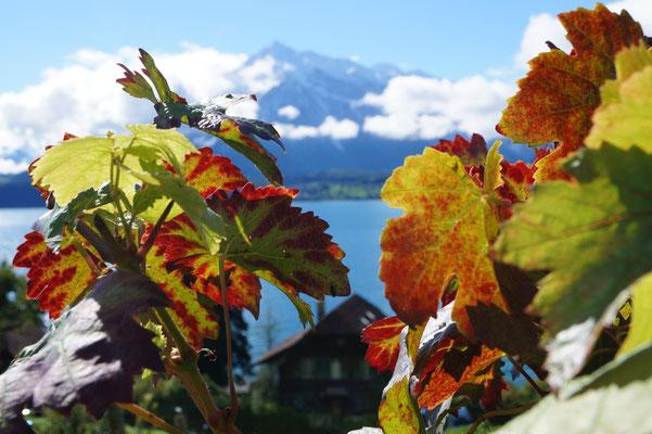 Seeklima und Alpensonne