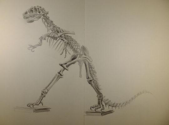 Igor, Allosaurus fragilis