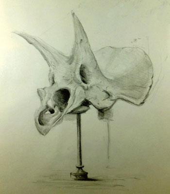 Germaine, Tricératops horridus