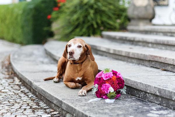 Knallig pinker Brautstrauß mit Sukkulenten, Silberblatt, Hahnenkamm, Nelken // Foto: Nina Solansky Fotografie