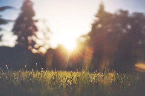 März ist der richtige Zeitpunkt, um den Rasen zu mähen und vertikutieren.