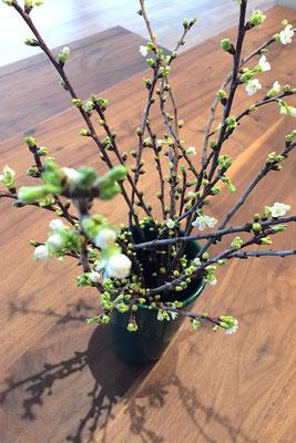 Kirschblüten im Loft der Praxis Dr. Liselotte Hutzel