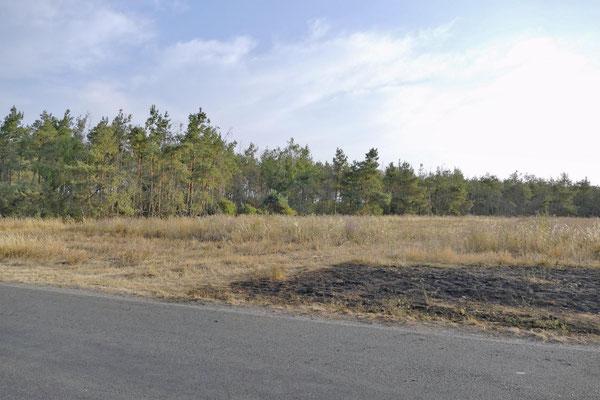 Nur etwa dreißig Schritte sind es vom Brandort zum angrenzenden Wald.