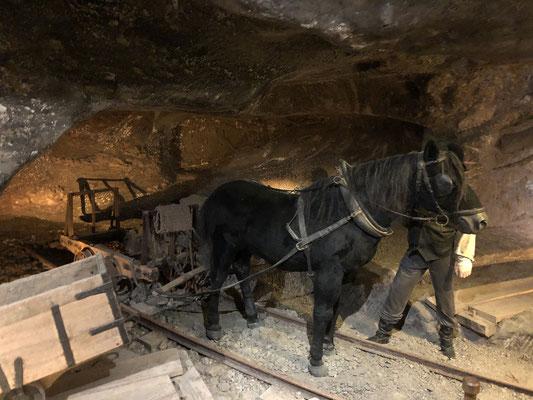 Pferde lebten bis zu 10 Jahre unter Tage