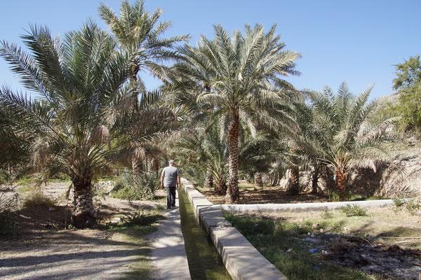 Bewässerung in der Oase Tanuf