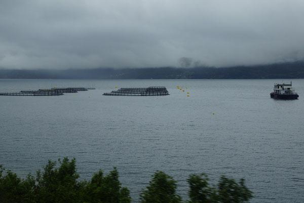 bald in jedem größern Fjord, Aquakultur!!