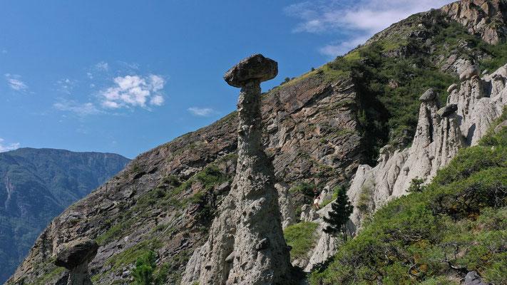 Steinpilze bis 7 m hoch