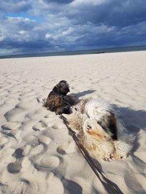 Laila und Mika am Meer, lieben Dank Ute für die tollen Fotos