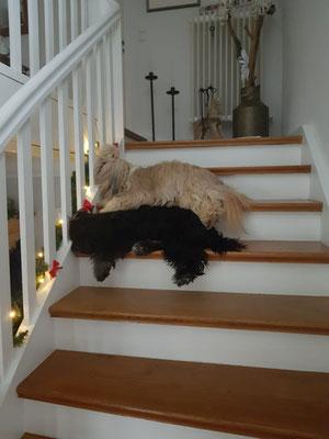 Filou und Merlin lieben ihre Treppe