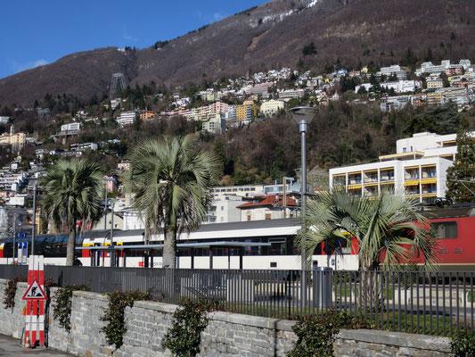 Butia yatay am Bahnhof von Locarno (Tessin), Februar 2016