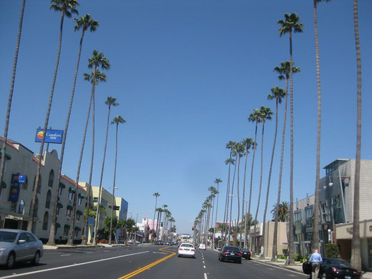 Washingtonia robusta, Los Angeles, Kalifornien, USA