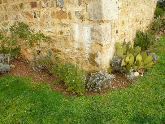Arbutus unedo, Rosmarin, Lavendel und Opuntia scheerii