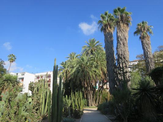 Succulents and Washingtonia robusta