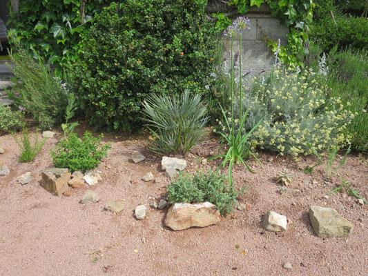 Agapahnthus  und frisch gepflanzte Chamaerops humilis var. argentea