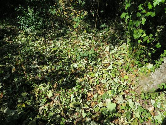 In den Wäldern an gegen Süden exponierten Hängen verlieren die Bäume bereits ihr Laub