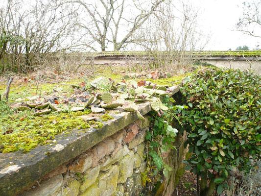Die meisten Opuntien liegen während dieser Jahreszeit flach