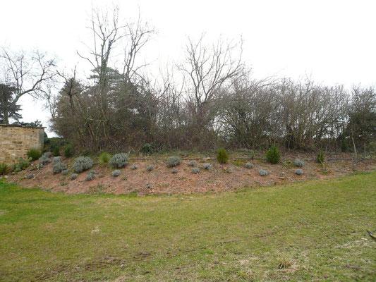Der Hang mit 8 Feigenbäumen gibt zu dieser Jahrszeit einen eher trauriges Bild ab