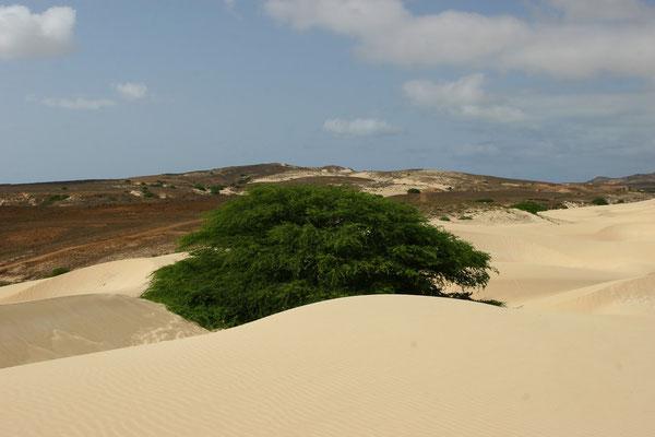 Nur ein paar genügsame Akazienbäume trotzen dem Sand