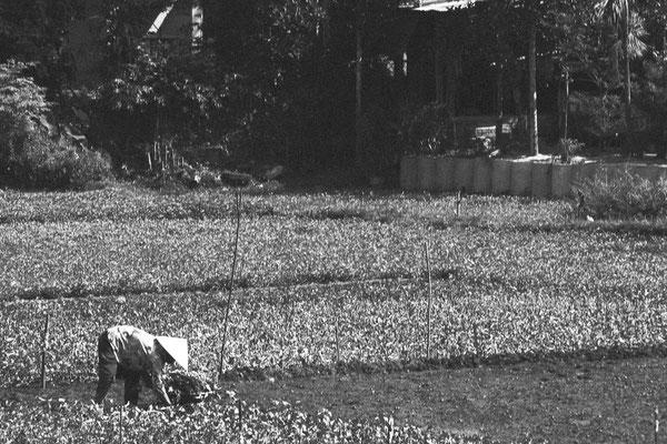 Reisbäuerin an der Nationalstraße 1 auf dem Weg von Da Nang nach My Son