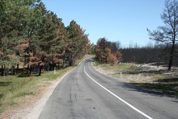 Mit einer Fähre von Klaipeda führt die Straße 50 km auf der Nehrung bis nach Nidden an die russische Grenze.