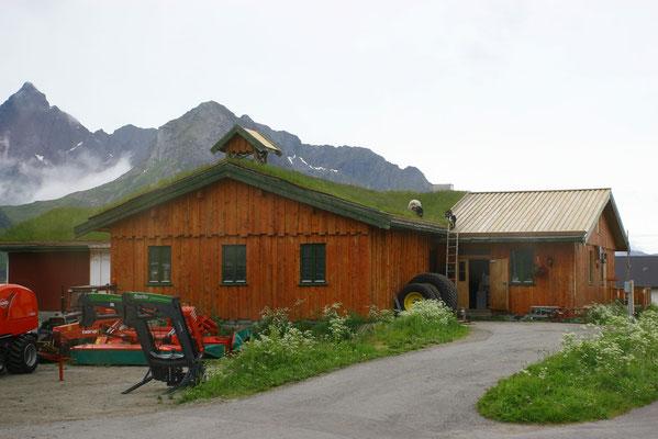 typisches Rasendach der Häuser in Nordnorwegen, zur Dachpflege werden Ziegen über eine Leiter (!) auf das Dach verbracht