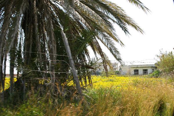 Die Gebäude verfallen seit der türkischen Besetzung und die Natur erobert das Gebiet allmählich wieder zurück.
