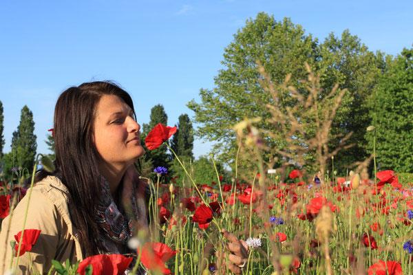 Blütenpracht auf der Insel Reichenau im Bodensee