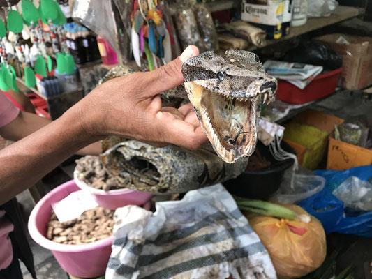 Die Natur hat durch die Jagd nach exotischen Tieren stark gelitten. die trotz Einfuhrverboten des Auslands massenweise in den Handel gelangen.