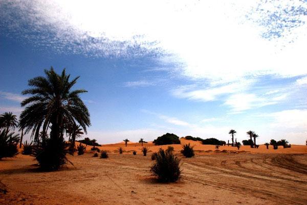 Saharalandschaft