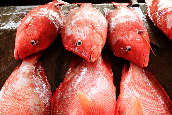 Zum Beispiel mit Fisch in seiner ganzen Vielfalt des Indischen Ozeans.
