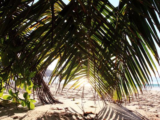 Die Anse Takamaka zählt zu den schönsten Stränden auf Mahé. Wer auf der Suche nach einem malerischen Bilderbuchstrand ist, den man normalerweise nur auf Postkarten sieht, sollte hier im goldenen Sand entspannen.