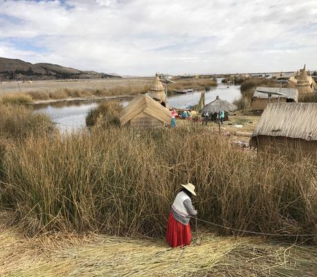 Der Titicacasee ist berühmt für seine schwimmenden Inseln, die früher von den Urus bewohnt wurden. Seit 1958 gelten die Urus als ausgestorben.