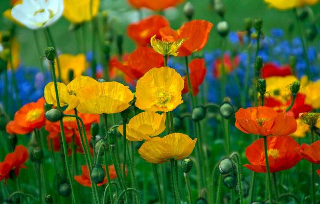 Blumenwiese im Park
