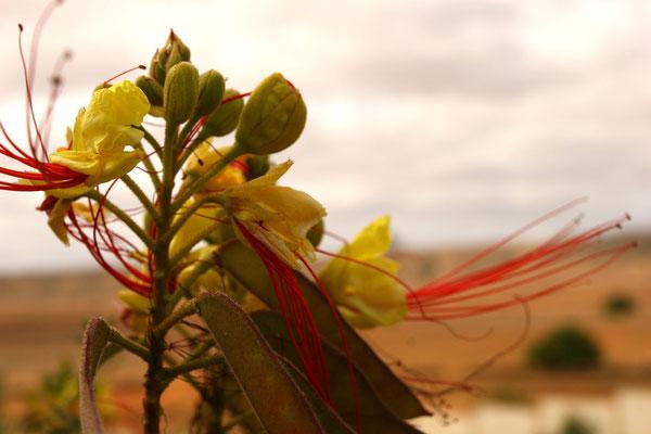 Es gibt viele endemische Pflanzen- und Vogelarten