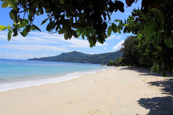 Die wunderschöne Kulisse, das kristallklare Wasser, der goldene Sandstrand in Kombination mit den imposanten Palmen und Takamakabäumen machen diesen Strand zu einem wahren Schatz auf Mahe´.