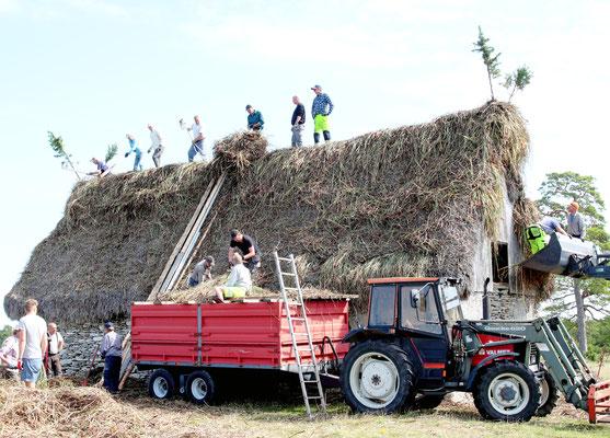 Bei der Neueindeckung eines Reetdaches ist es Tradition, dass alle mithelfen.