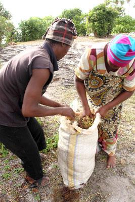 In großen Säcken geht es dann per Fahrrad zum Verkauf beim Großhändler in Jambiani, wo es gesammelt und weitertransportiert wird.