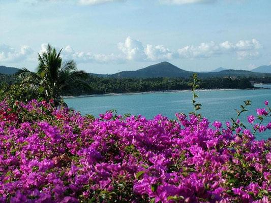 tropische Blumenpracht am chaweng beach