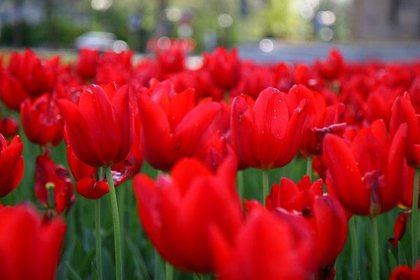 ....in schöner Blumenpracht