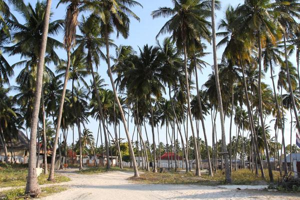 Das Dorf Jambiani am gleichnamigen Strand ist wunderschön eingerahmt von einem Meer aus Palmen.