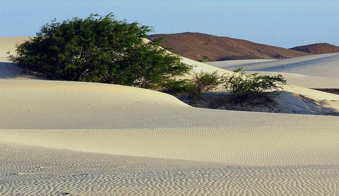 Vor dem Hintergrund einer Bergkette wellen sich weiße Dünenfelder - Wüstenfeeling pur
