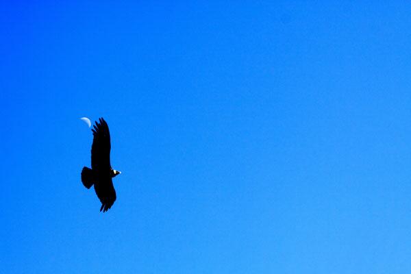 Nicht selten können hier auch Kondore im Gleitflug beobachtet werden.